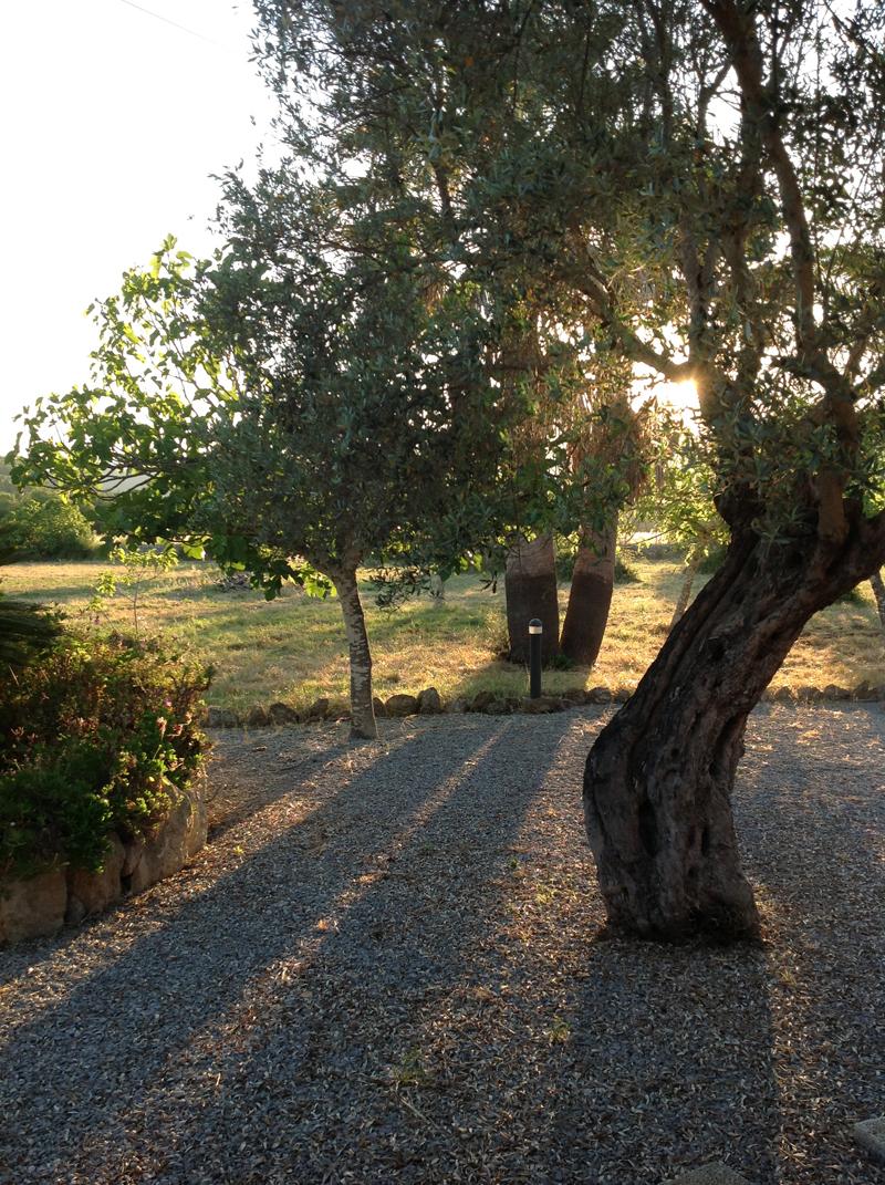 olivetrees-web